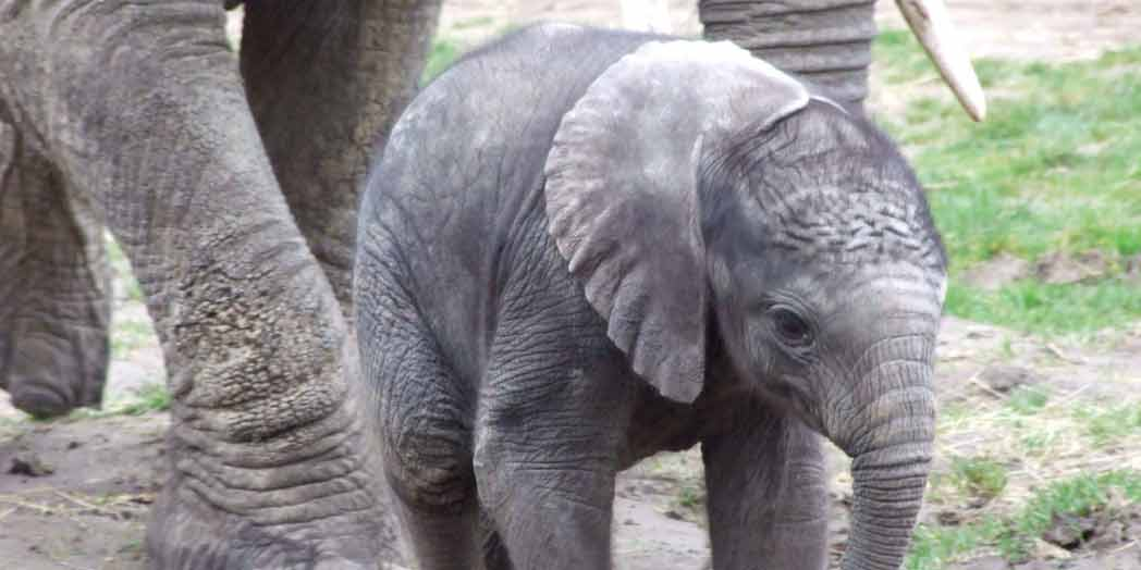 7 Unforgettable Elephant Gift Ideas | Fresh Addiction